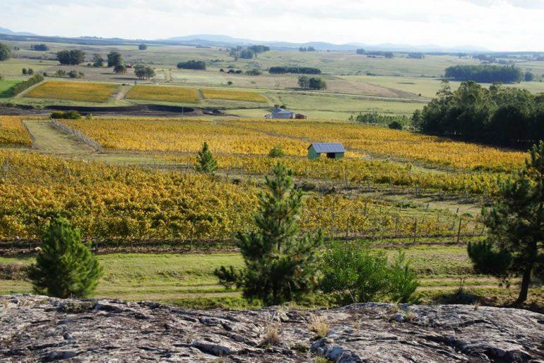 Visita à vinícola Alto de la Ballena