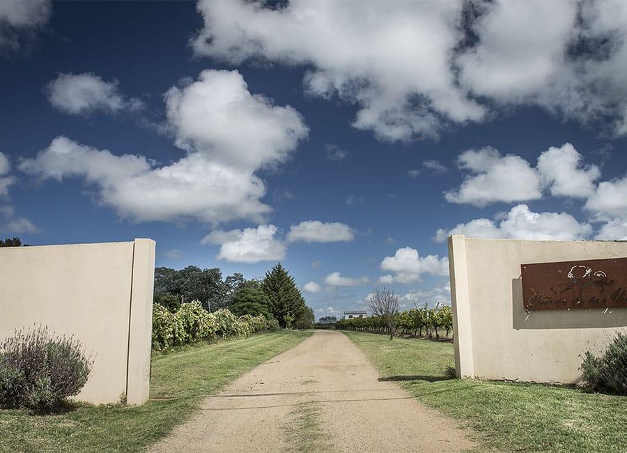 Visita à vinícola Viñedo de los Vientos