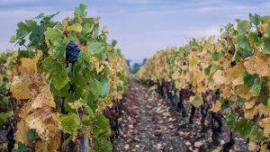 queda na produção de vinhos franceses em 2019