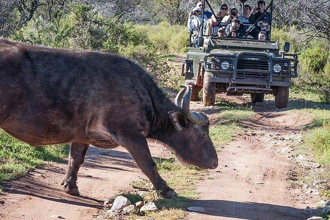 Assista: viajantes fogem de girafa durante safári na África do Sul