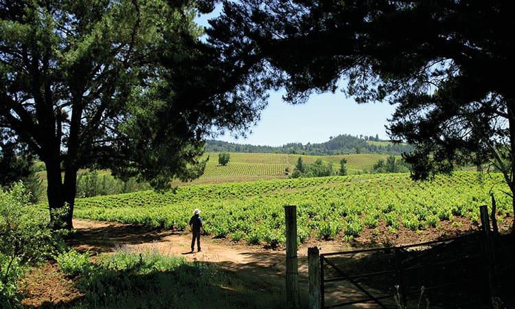 Vinhos chilenos: Vale do Itata é a região da vez